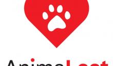 Retrouvez vos chiens et chats avec AnimaLost, l'appli