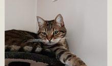 Frimousse : l' appli Smartphone qui fait parler vos chats !